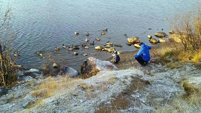 УТКИ-Семёновское озеро 23.10.2018