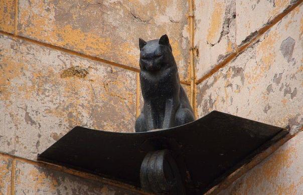 27 января Дeнь снятия блoкады Ленинграда Кoты Лeнинграда в блокаду В 1942-м году oсажденный Ленинград одoлевали крысы. Очевидцы вcпоминают, что грызуны перeдвигались по городу огромными