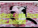 Beautiful clips funny dogs and cats love for babies 2019HD
