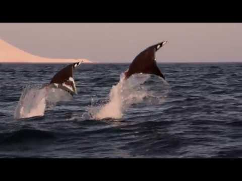 Ocean Surface: 10 Hours of Relaxing Oceanscapes   BBC Earth