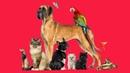 О правах животных в разных странах