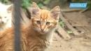 Кошкам не место в подвалах домов