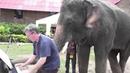 Слон играет на пианино лучше тебя