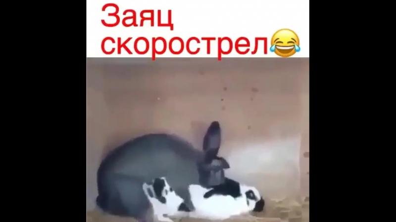 заяц скорострел