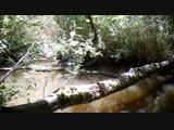 Разнообразная жизнь дерева во французском лесу (фото-ловушка)