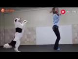 Собака, которая любит танцевать.