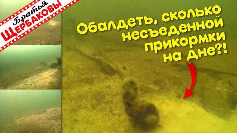 Почему рыбы не всегда едят ЗИМНЮЮ ПРИКОРМКУ Подводные съемки Зимняя рыбалка Братья Щербаковы