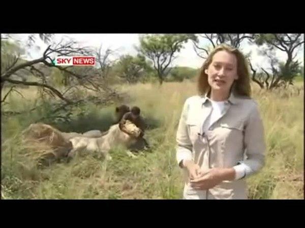 Espetacular mostra de valor e respeito pelos animais