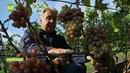Сибирский виноградарь А Рыкалин
