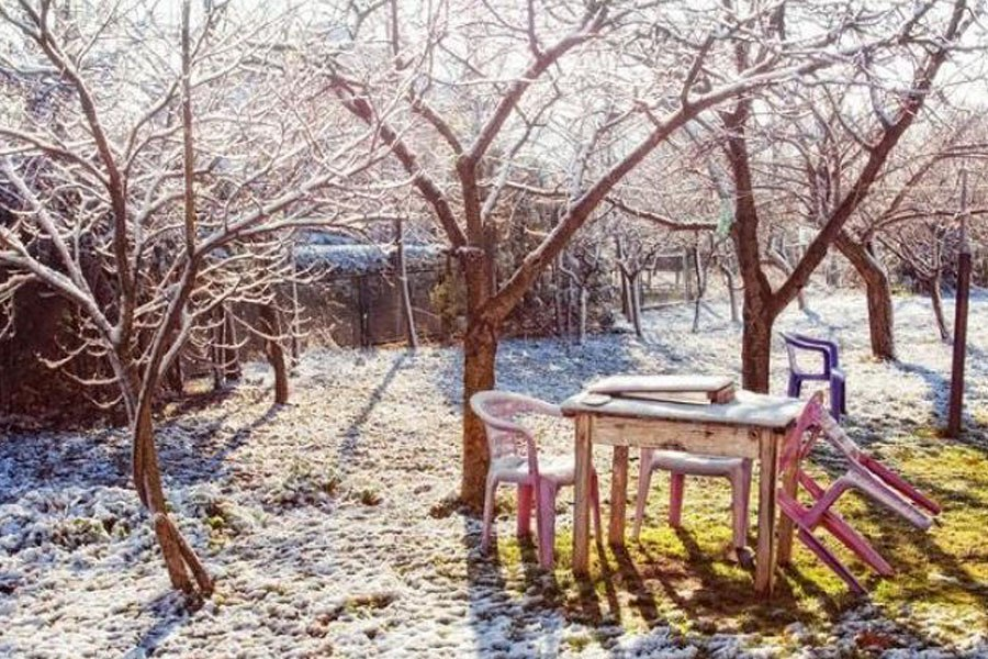Восстановление деревьев, пострадавших от мороза