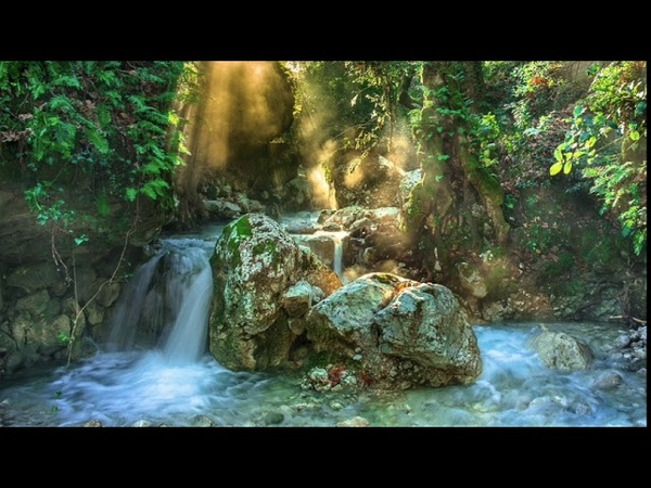 Nature Healing music Zen Meditation Water sounds Forest Relaxing Sleeping Calming Soothing music