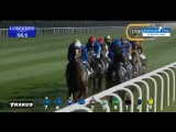 Скачки в Дубае ( Дубай шима классик ) Хокбилл