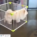 Can't cage the fluff