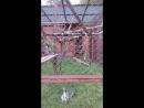 Лемуры пермского зоопарка осваивают новые качели