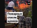 Пожарные нашли восемь щенят на пепелище сгоревшего дома