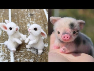 Cute baby animals Videos Compilation cute moment of the animals - Cutest Animals On Earth #1
