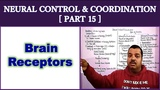 Neural Control and Coordination for NEET Part 15 Brain Receptors