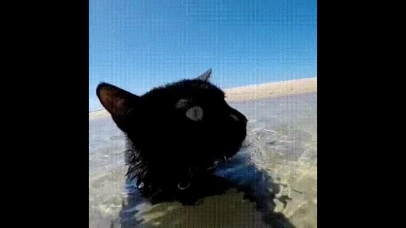 Вот котик например плавает в океане А ты плаваешь в пучине проблем забот и переживаний