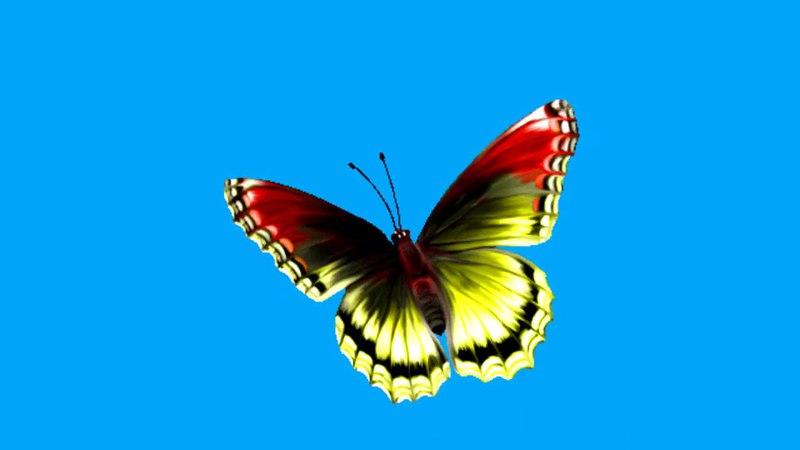 FREE BLUE SCREEN BUTTERFLY ☯ CHROMA KEY ☯ ФУТАЖ ХРОМАКЕЙ БАБОЧКА ➥ yda4aTV
