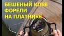Чумовая форель Ловля форели на платнике в Москве