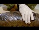 Стив Бэкшалл Заплыв с чудовищами 1 Анаконда Познавательный природа животные 2012