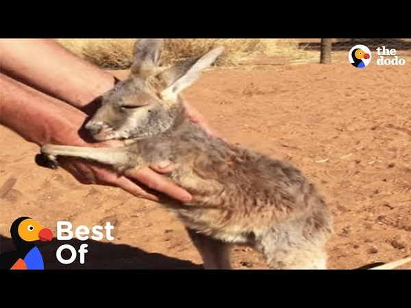Wild Baby Animal Rescues That Will Make You Smile Compilation | The Dodo Best Of
