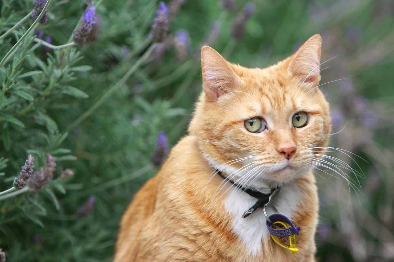 Картинки с надписями кошка, поздравления днем