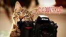 Приколы с котами и смешная озвучка животных – Кот это Магия от PSO