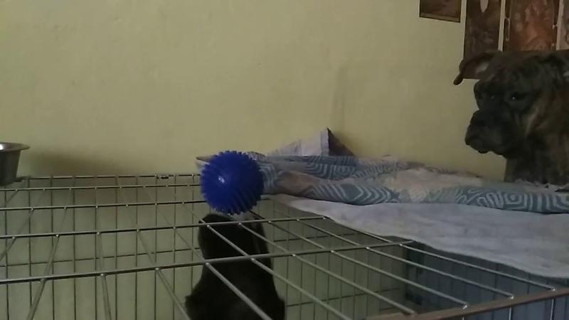 Сэм поделилась мячиком с Габи