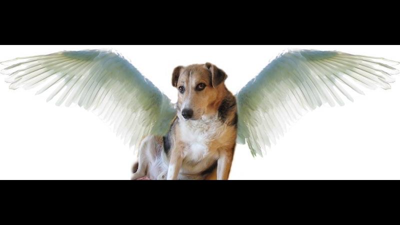 Yuma McKenna - my angel