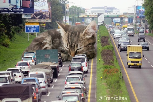 Художник из Индонезии представил, как котики могли бы захватить наш мир, будь они чуть больше обычного Если что-то нужно сделать лучше, просто добавь котика — так решил Франсдита Муафидин