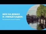 Мох на домах и «умные кадки». Как развивается зеленый Петербург