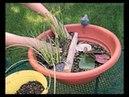 Особые способы выращивания водяной лилии