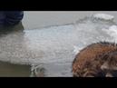 Дрейфующего на льдине енота спасли в Приморско Ахтарске
