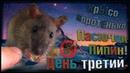 (О) Крысенок | Пасючок Пипин приручается! День третий. (Wild Rats | Дикие Крысы)