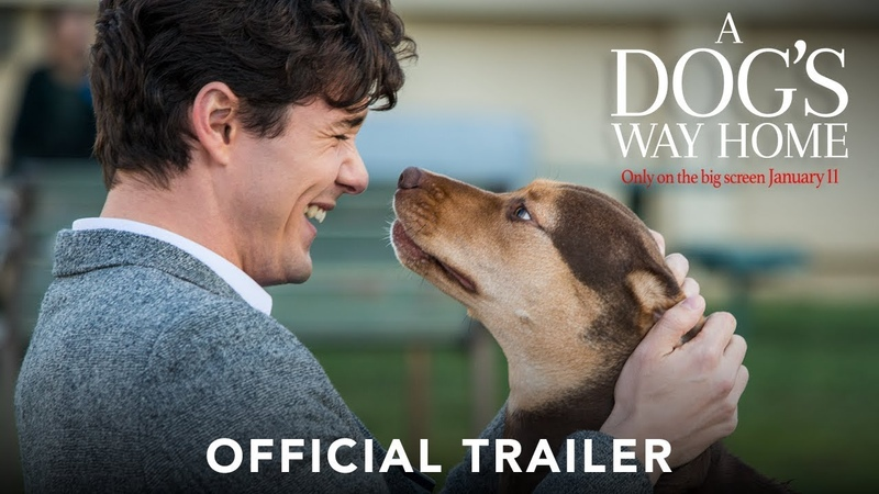 A DOGS WAY HOME - Official Trailer (HD)