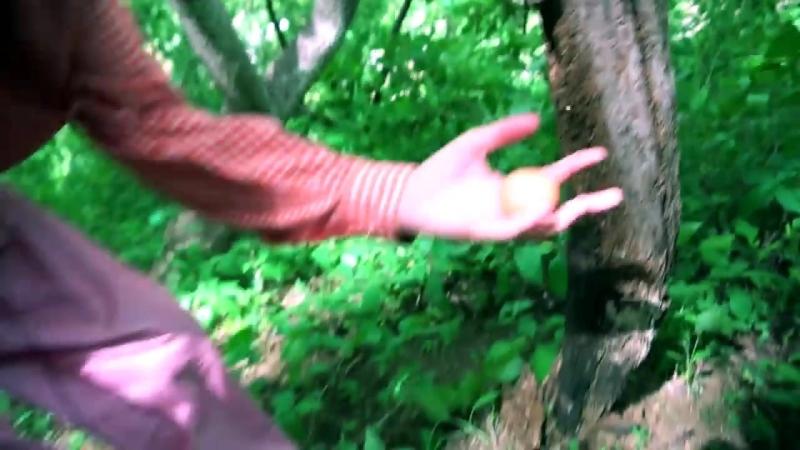Яичное дерево (Azazin Kreet)