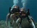 1991 Палаван Последнее убежище - Подводная одиссея команды Кусто