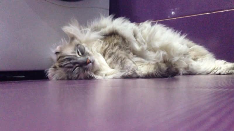 кот (греиться)