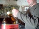 Витаминизация бычков Прирост 1200 гр сутку