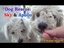 Sky Apollo rescued while the Endeavour space shuttle flies over us - a MUST SEE. Please share.