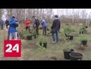 Во Владивостоке сажают кедровый лес на высоте 200 метров над уровнем моря - Россия 24