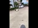 собака съела товар 😹