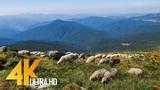 The Carpathians - Summertime 4K Nature Documentary Film