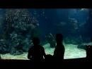 Бангкок.Аквариум.Таиланд 2017.Siam Ocean World.