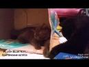 Гала и Лора Plush Blue Ray