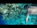 Подводная одиссея...