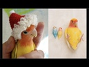 Cute Parrots Videos Compilation cute moment of the animals - Soo Cute! 6