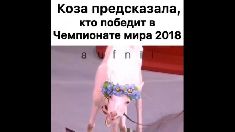 коза предсказательница