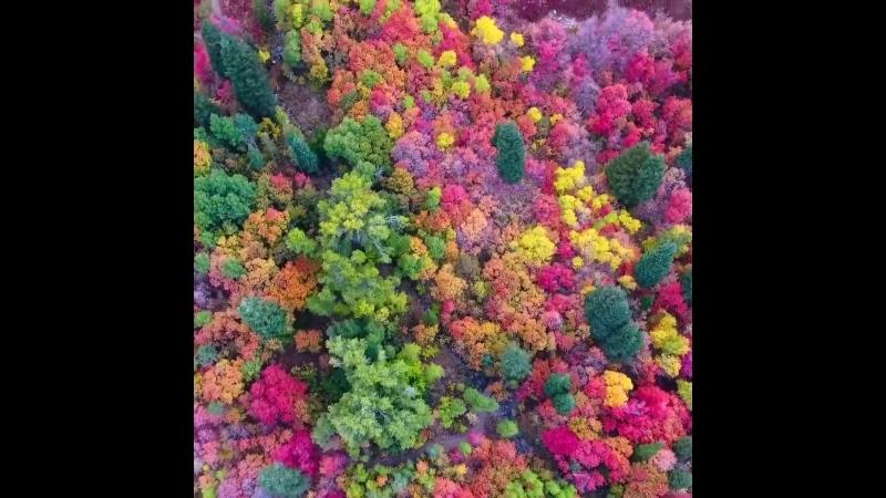 Цвета в Северной Юты.
